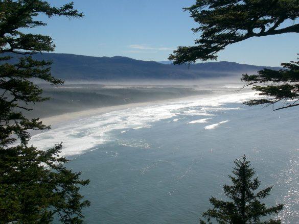 Where Fog Meets the Cape