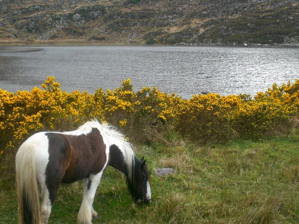 The Enchantment of Killarney
