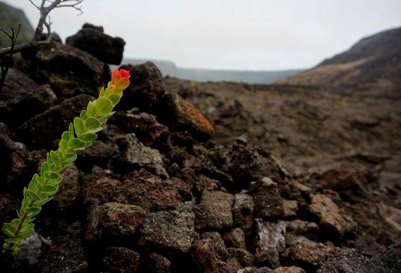 Walking Through the Lava Lake