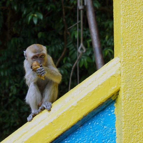 The Shrine where Monkeys Rule