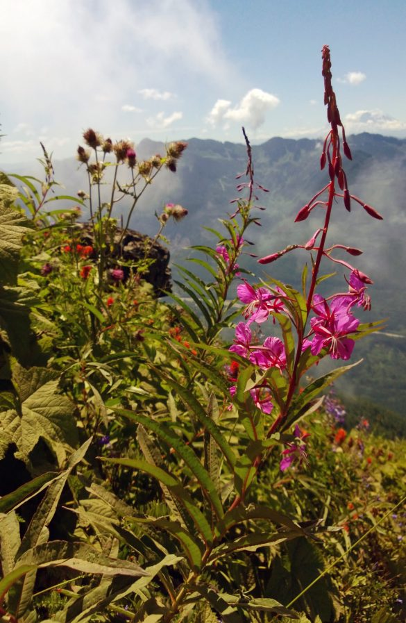 The Steep Climb to Mountain Meadows