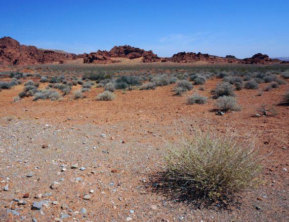 Burning Sands in the Red Desert