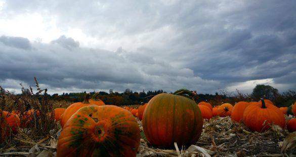 Pumpkin Sky