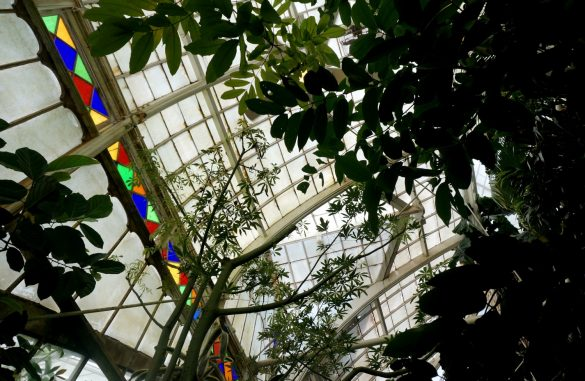 A Colorful Visit to a Conservatory
