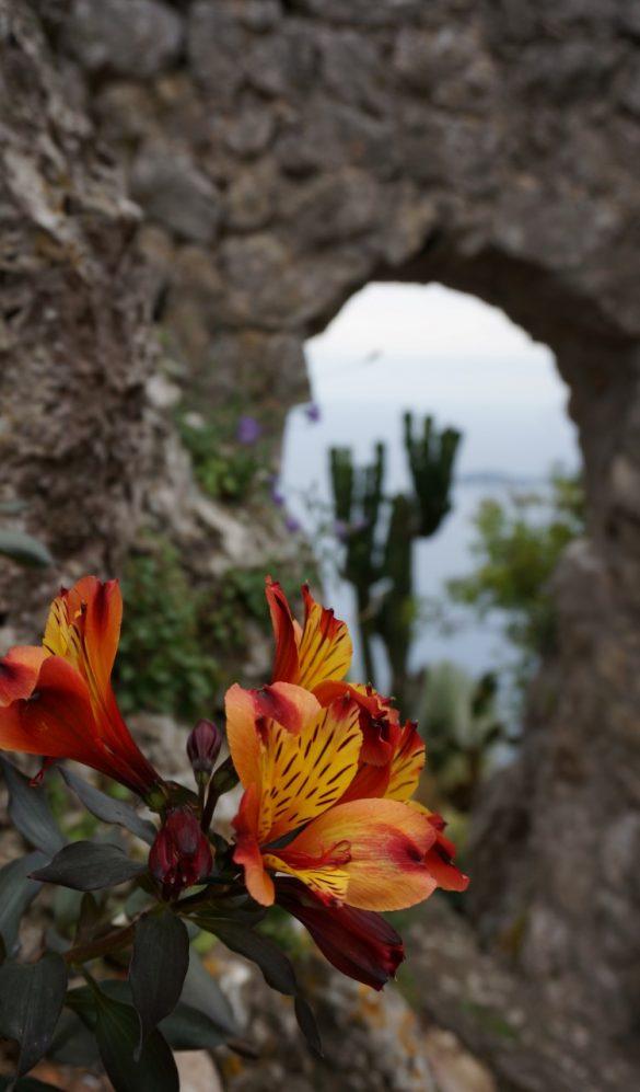 The Coastal Garden on the Hill