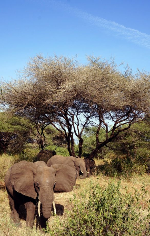 The Elephants' Thicket at Sunset