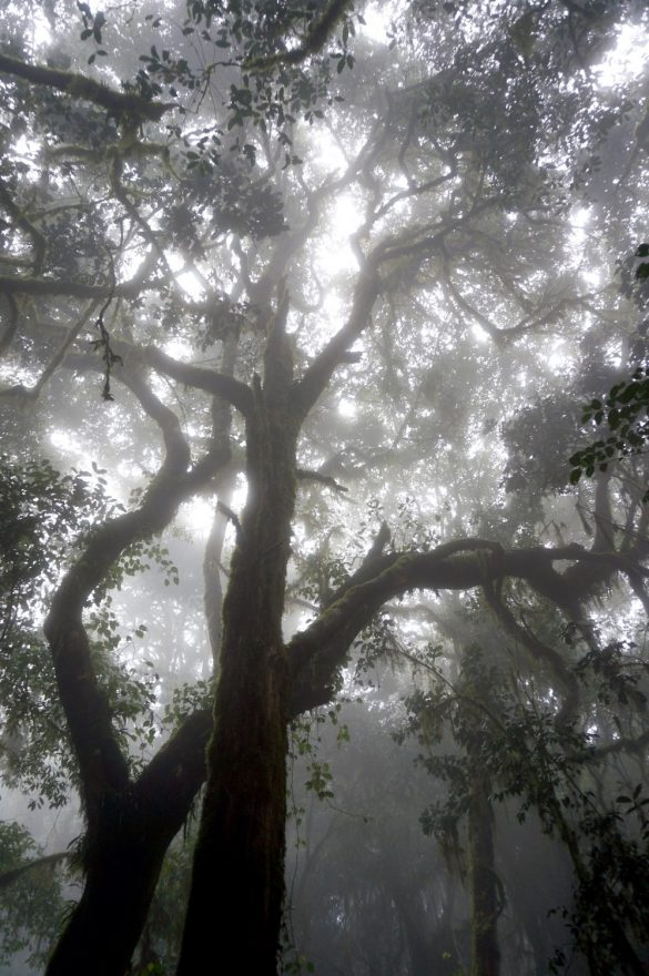 Guardians of the Forest of Mists