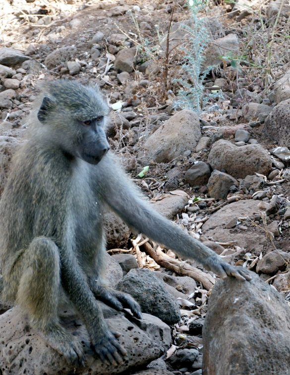 Birds and Monkeys of Lake Manyara