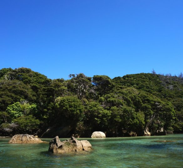 Sunny Day in the Tasman Inlets