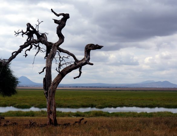Life and Death on the Floodplains