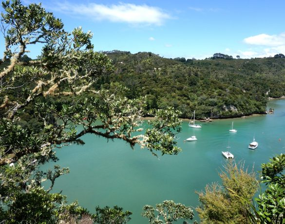 Forest to Beach on the Coromandel