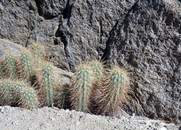 The Palm Oases of Anza Borrego